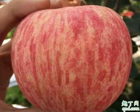 片红苹果与条红苹果哪个营养高 片红苹果和条红苹果怎么选择3